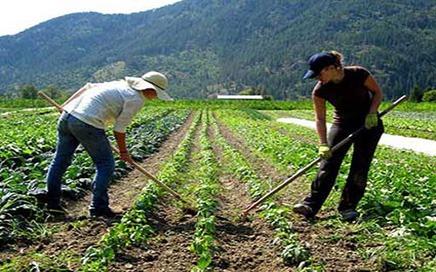 çiftlik elemanı iş ilanı